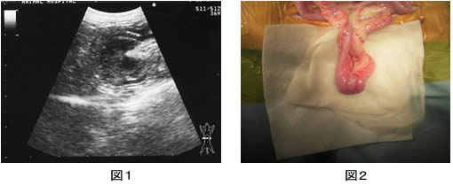 腹部触診とエコー検査